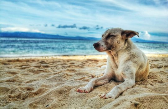 Doggone Train – Part 4 June 2019